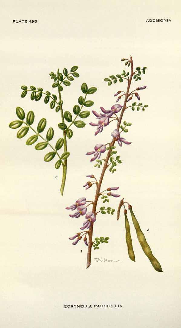Poitea paucifolia